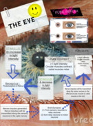 BIOLOGY HOLIDAY ASSIGNMENT THE EYE's thumbnail