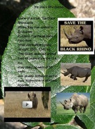 The black Rhino's thumbnail