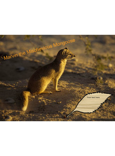 Marvin the mischevious mongoose