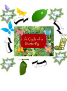 butterfly life cycle's thumbnail