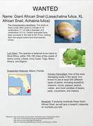 APES Giant African Snail's thumbnail