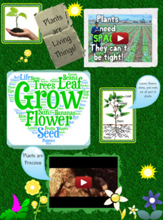 Plants Are Living Things!