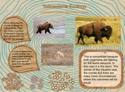 Yellowstone Competition's thumbnail