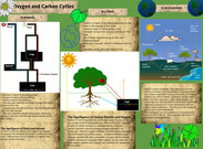 Oxygen And Carbon Cycles's thumbnail