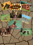 WildAnimals's thumbnail