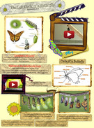 The Life Cycle of a Butterfly' thumbnail