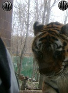 This is a tiger's thumbnail