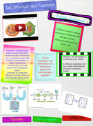 Cell Structure and Functions 's thumbnail