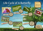 Life cycle of the Butterfly's thumbnail