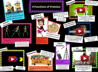 8 Function of Proteins