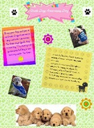 Guide Dogs Awareness Day's thumbnail
