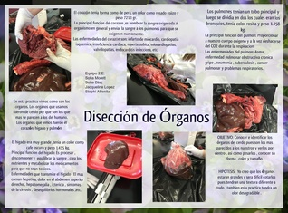 Diseccion organos