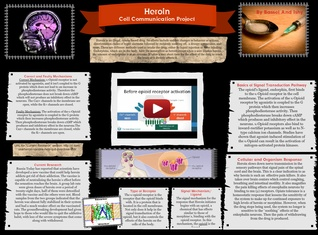 Heroin - Cell Communication