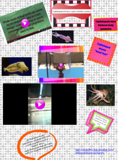 Science Project (Cephalopods)