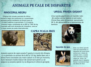 Animale pe cale de disparitie's thumbnail