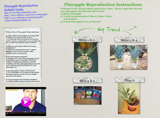 Pineapple Reproduction