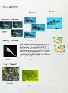 Oceanic Food Web #2