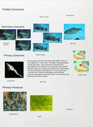 Oceanic Food Web #2's thumbnail