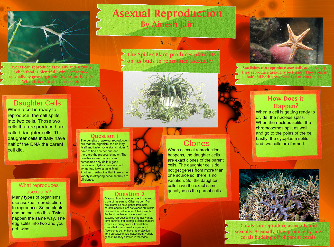 Do starfish reproduce by budding asexual reproduction