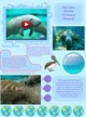 West Indian Manatee thumbnail