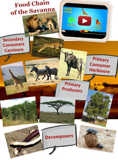 Food Chain of the Savanna
